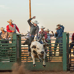 Image of rider on bull at Laramie Jubilee Days rodeo